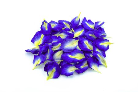 pile of blue petal flower and blossom butterfly pea Stock Photo