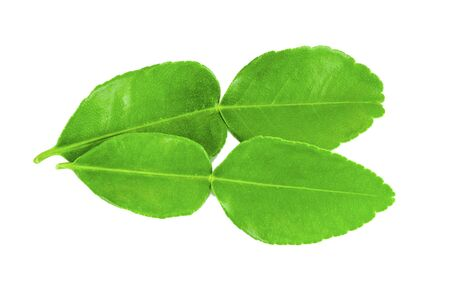 top view kaffir lime leaves on white background Stock Photo