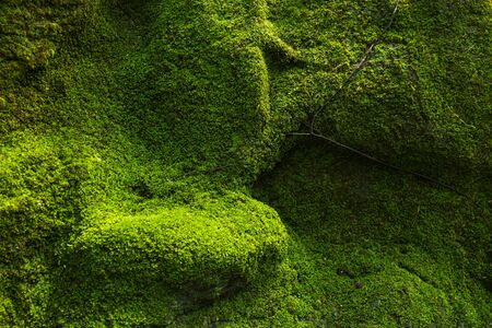 close up green moss background on rock in garden