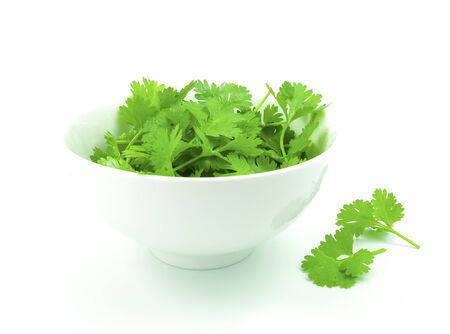 fresh coriander in white bowl on white background