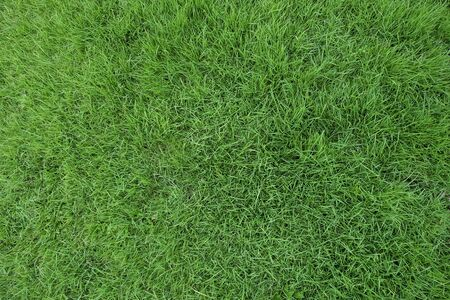 green grass surface background in spring time
