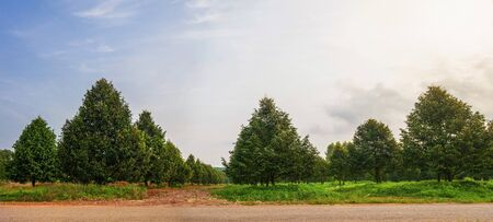 panorama durian tree farm in thailand shoot in morning time Stock Photo