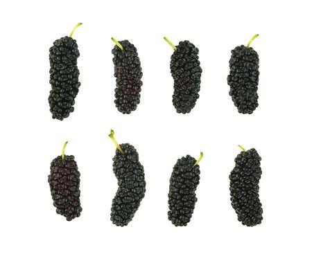 set of isolated mulberry fruit on white background