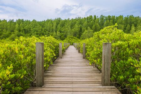 wooden path way along the mangrove tree in thailand Stock Photo