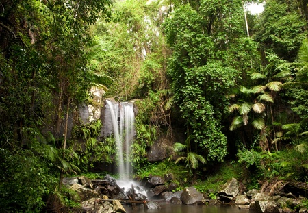 lush: Waterfall making its way into a pond in the rainforest