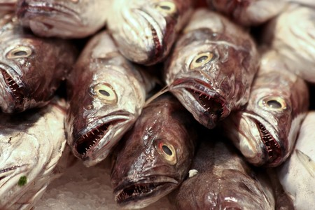 Fish Heads at the Market Stock Photo - 6952012