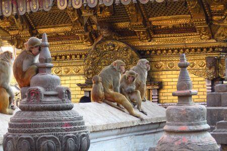 Monkeys at the Swaymbhunath stupa, aka Monkey Temple, Kathmandu, Nepal Stockfoto