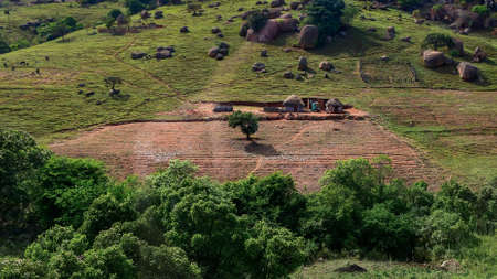 Lonely tree on farmers field and typical African rondavel huts in a hilly countryside landscape, Swaziland, Eswatini, Africa