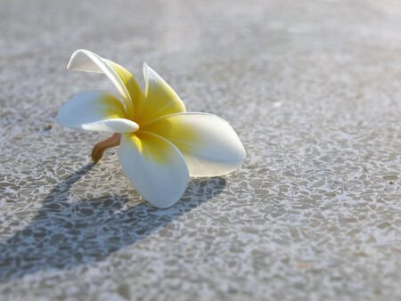 white flower on the floor Stock Photo - 10472345