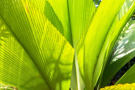 Palm leaves Stock Photo - 20914949