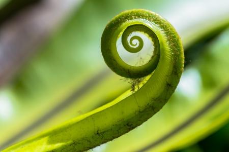 origin: The green fern origin  Stock Photo