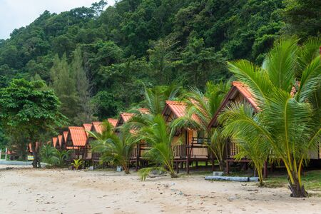 Coconut palm trees along the beach resort