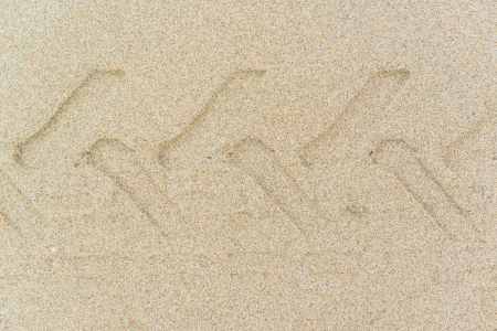 imprint on the sand photo