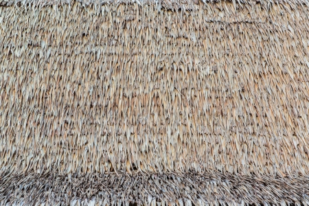 thatch: texture of thatch roof Stock Photo