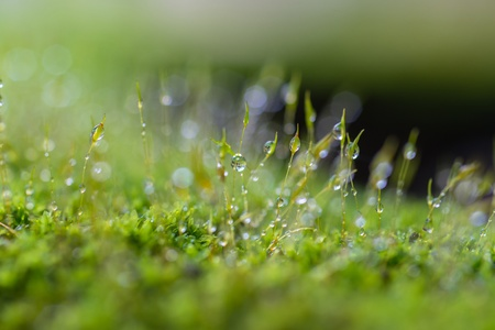 Closeup moss in forest after rain  Imagens
