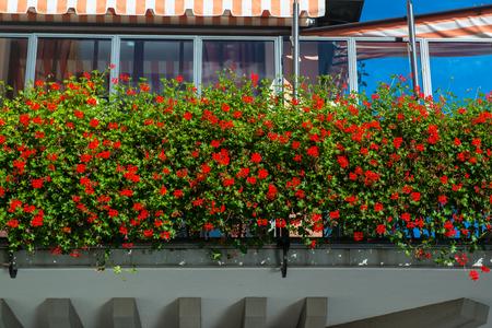 Swiss window with red flowers photo