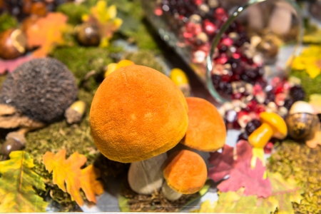 bolete: Orange cap bolete Stock Photo