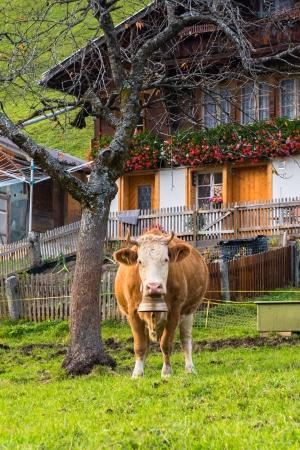 Grindelwald Village, Switzerland photo
