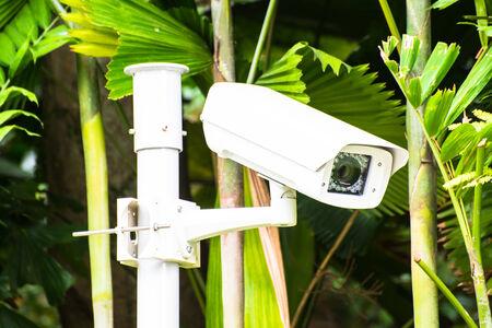 paranoia: CCTV security camera in the garden background