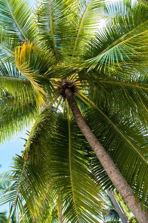 palapa: Tropical white sand beach with palm trees