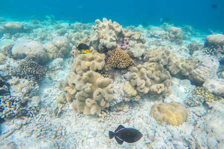 maldives island: exotic marine life near Maldives island, tropical summer vacation concept