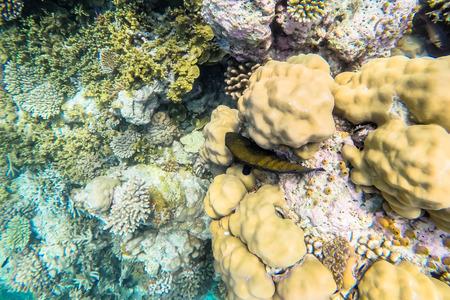 exotic marine life near Maldives island, tropical summer vacation concept photo
