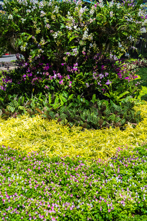 landscaped garden: Lush landscaped garden with flowerbed and colorful plants