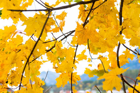 copse: Beautiful Colorful Autumn Leaves Stock Photo