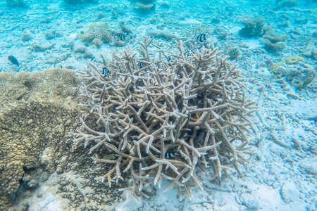 deep water: exotic marine life near Maldives island, tropical summer vacation concept