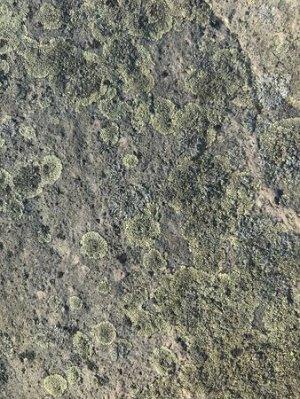 A textural close up on moss and lichen on a stone by the sea. Stok Fotoğraf