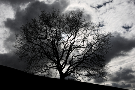 Mystical leafless tree in front of spooky clouded sky
