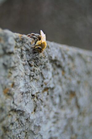morning dew: Detailed frozen bee with morning dew