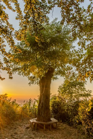 regenerated: Warm sunset at regenerated tree with bench Stock Photo