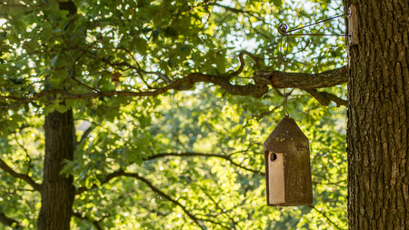 whiff: Outdoor birdhouse on tree in forest