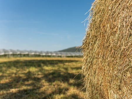 food stuff: Farming with hay bale in front of greenhouse Stock Photo
