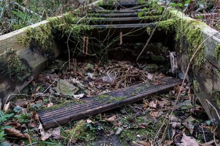 Griezelige, overwoekerde en kapotte trappen in het bos