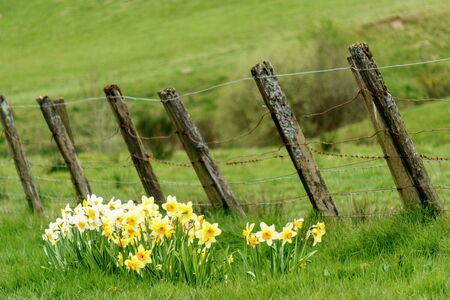 Yellow flowers in front of fence and landscape