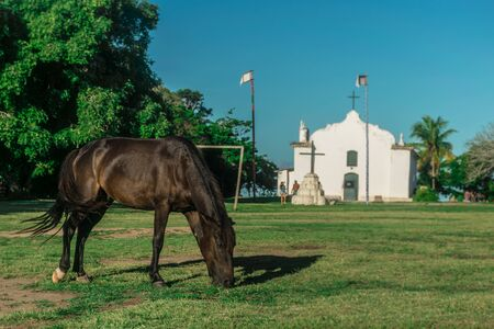 Black horse eating grass during the daylight in a field in front of the simple and white Quadrado church, in Trancoso, Bahia, Porto Seguro, with palm trees, native vegetation and visitors
