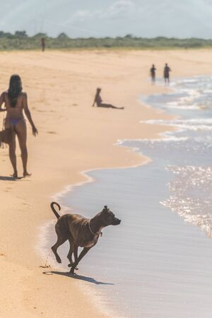 A dog is walking towards the atlantic ocean, a woman walks on the beach wearing a bikini and carrying a bag, a man is steated facing the sea