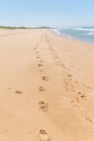 A beach, a track of footprints on the sand of the brazilian atlantic coast, some people are far ahead, a hill, a tire trail can also be seen at Paulo Cezar Vinha park, in Setiba, Espirito Santo Imagens - 129721340