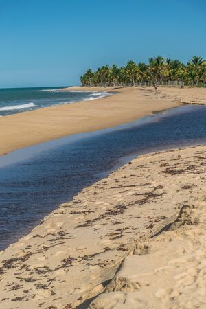 Saline pool formations in the tropical area of the northeast Taipe beach, with brown kelps in the thin sand, palm trees and the waves of the green ocean at Trancoso, Porto Seguro, Bahia