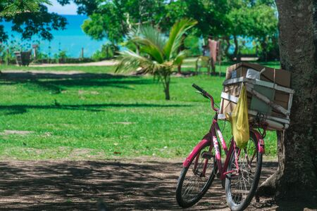 Detailed view of a violet bicycle with a pallet rump full of cardboxes and a plastic bag leaning into a tree, with a grass field with palm trees in the background at Trancoso, Porto Seguro, Bahia