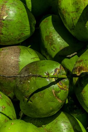 Close up and detailed view of a bunch of tropical bright green coconuts, fruits of the coconut palm, huddled together under natural light with some shadows, high contrast and some grey scratch marks