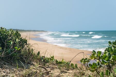 Les plantes Phothole poussent leurs racines au milieu du sable brésilien, leurs feuilles sont rondes, la frange est floue, les vagues remplissent l'océan atlantique de mousse au parc Paulo Cezar Vinha, à Setiba, Espirito Santo