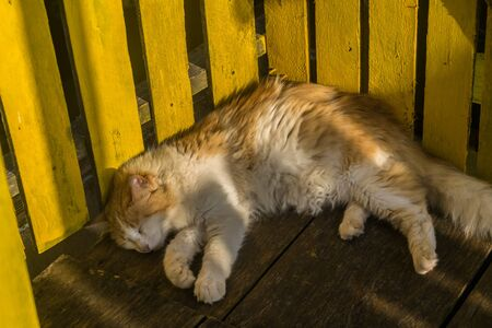 A cute orange and white cat is taking a nap on a wood floor leaning its back in a yellow wood fence, the day light covers haf of the cats body and only one half of its tail appears Imagens