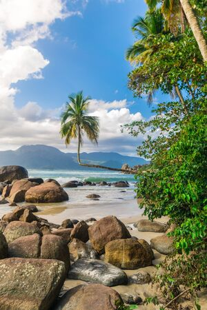 Tropical landscape of a sunny beach with an exquisite coconut tree grown in the horizontal, and big rocks by the sand. It is called coqueiro deitado, a postcard point at the aventureiro beach, in ilha grande, Rj. Reklamní fotografie