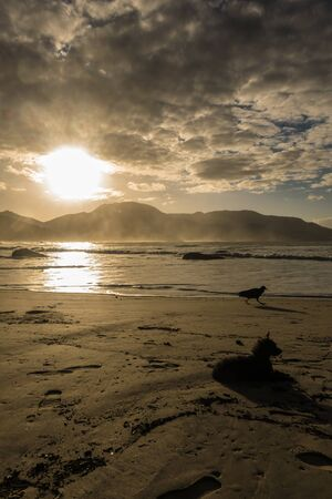 Quiet, beautiful and high contrast view of the sunrise between the mountains and by the beach with a small dog resting in the ground, a bird walking by and footprints by the sand at Ilha Grande Imagens
