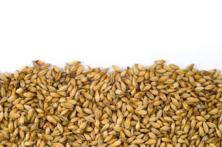 Barley malt texture pale ale for backgrounds, half malt image, half image with white background.