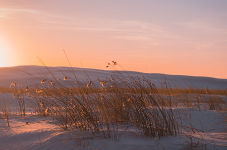 Flowers on the dunes with sunset