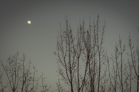 Moon at dusk in the sky of lebanon 免版税图像